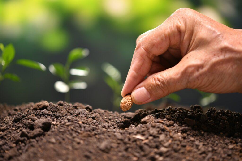 Einpflanzen von Samen